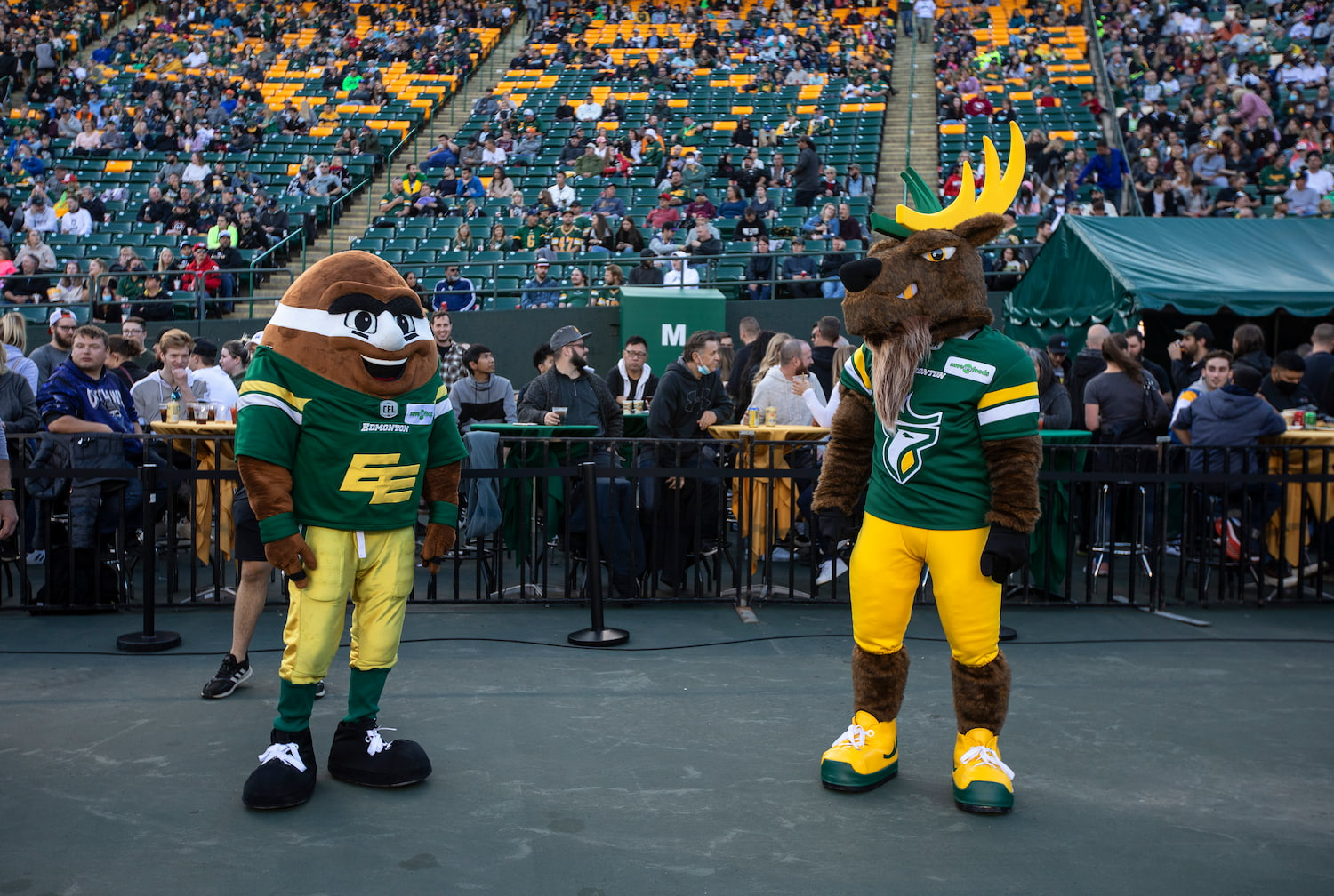 The old Edmonton mascot, Punter, stands with the new mascot, Spike the Elk, at a game in September.